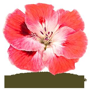 Les Fleurs Comestibles Fraicheurquebec Com